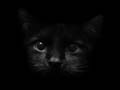 Malicia Darkwave : Sound of Black Cats